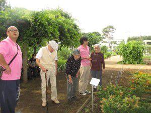 20150611東京都薬用植物園へ行ってきました!4