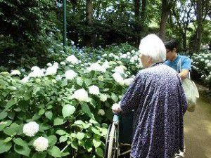 20150610貴重な晴れの日を狙い豊島園のあじさい祭りへ行ってきました!5