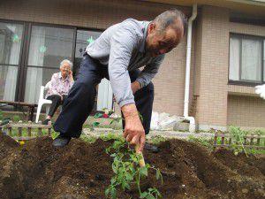 20150520-5月上旬から、お庭で夏野菜を育てています!3