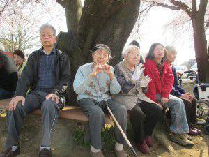 20150330桜満開!4