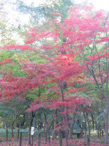 20151130新座市にある平林寺へ紅葉を見に行ってきました11