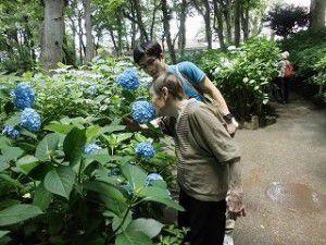 20150610貴重な晴れの日を狙い豊島園のあじさい祭りへ行ってきました!2